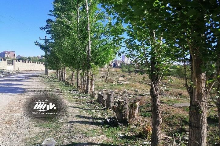 وضعیت فضای سبز و قطع درختان در انتهای خیابان کهرم