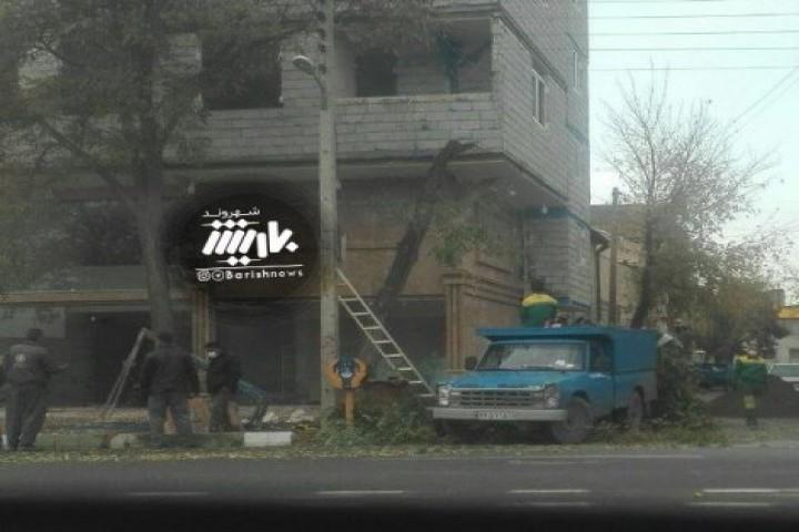 قطع درختان به بهانه زیبا شدن ساختمان
