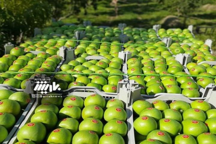 برداشت سیب سبز روستای زینالو