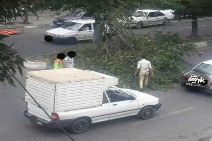 شکسته شدن درخت در اثر وزش باد در خیابان باکری