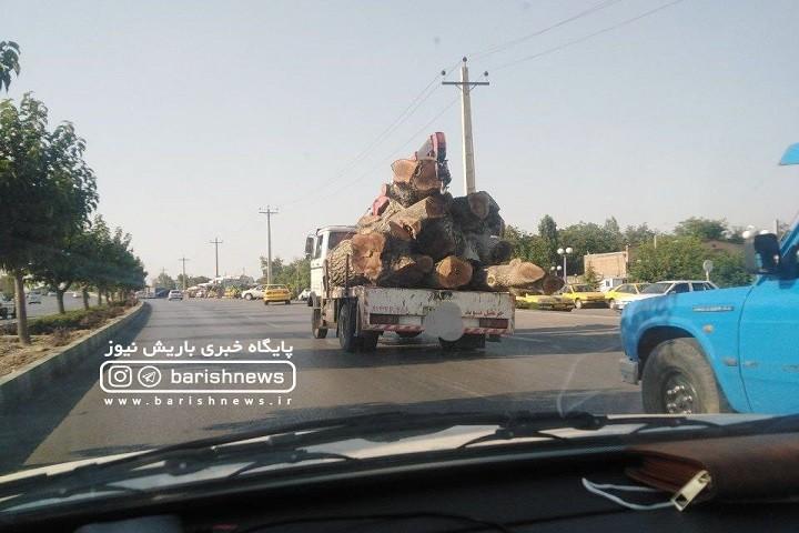 حمل درختان با قدمت چتد ساله در خیابان های ارومیه