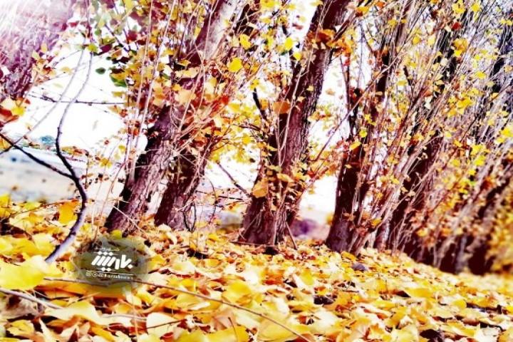 طبیعت زیبای پاییزی روستای زیوه