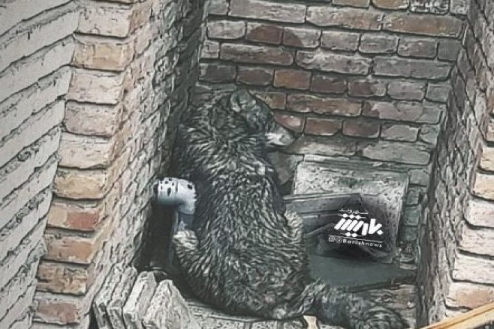 مشاهده شش قلاده گرگ در شهرک شهریار / زنده گیری یک قلاده گرگ در یکی از منازل مسکونی