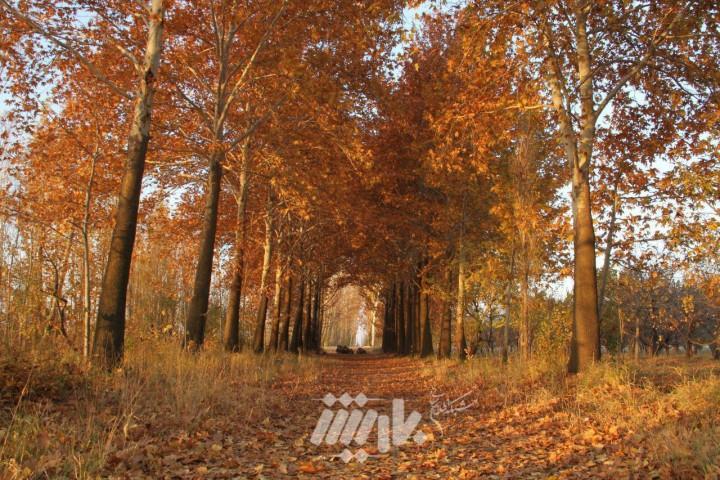 تصاویری زیبا از پاییز باغات ارومیه