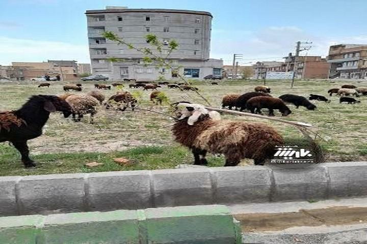 وضعیت خیابان طریقت و گلایه مردم از این وضعیت