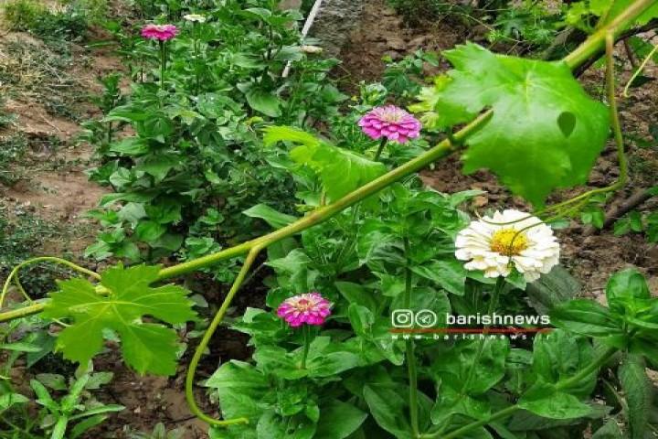 گلهای زیبا باغهای روستای وزیرآباد