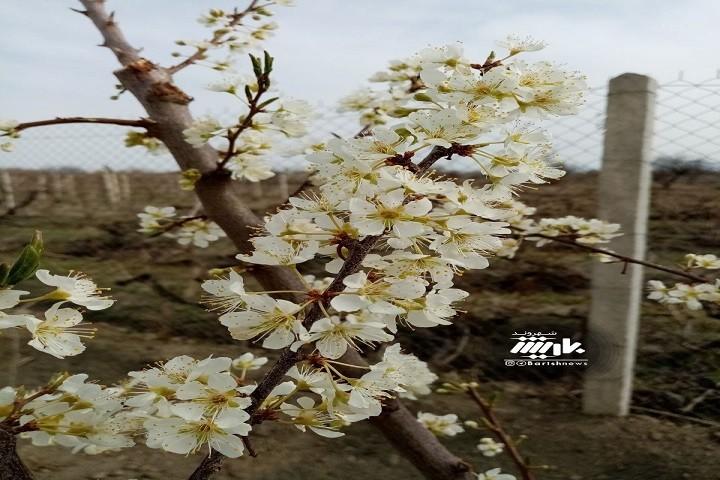 طبیعت زیبای روستای کشتیبان