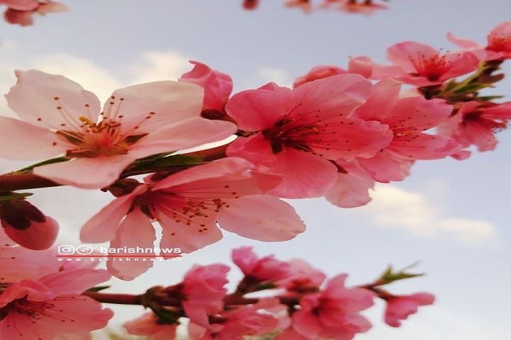 طبیعت بهاری / روستای پشتگل