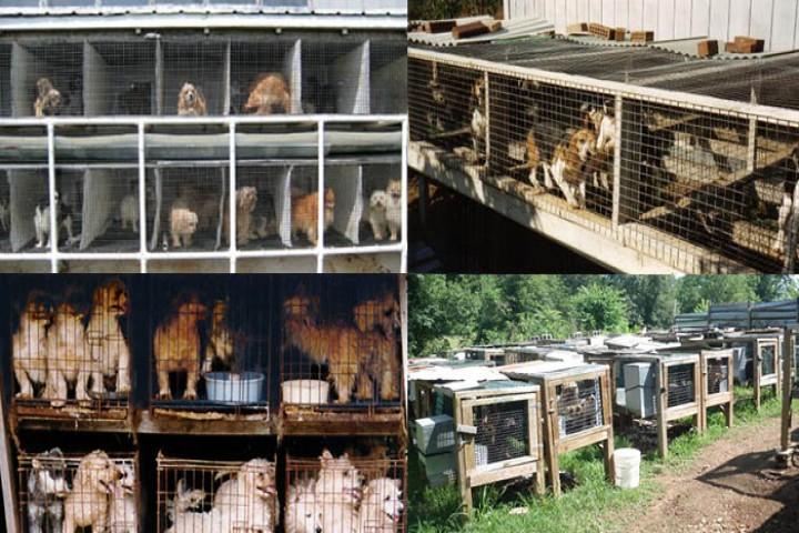 تجارت حیوانات خانگی، سلامت آن هارا به خطر انداخته است