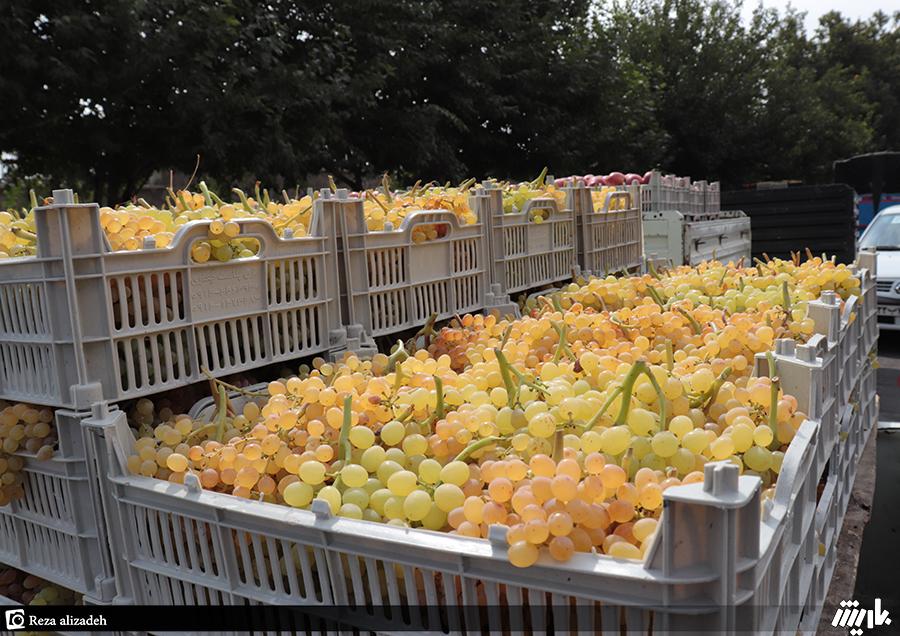 واردات گوجهفرنگی و انگور به ارومیه ممنوع است