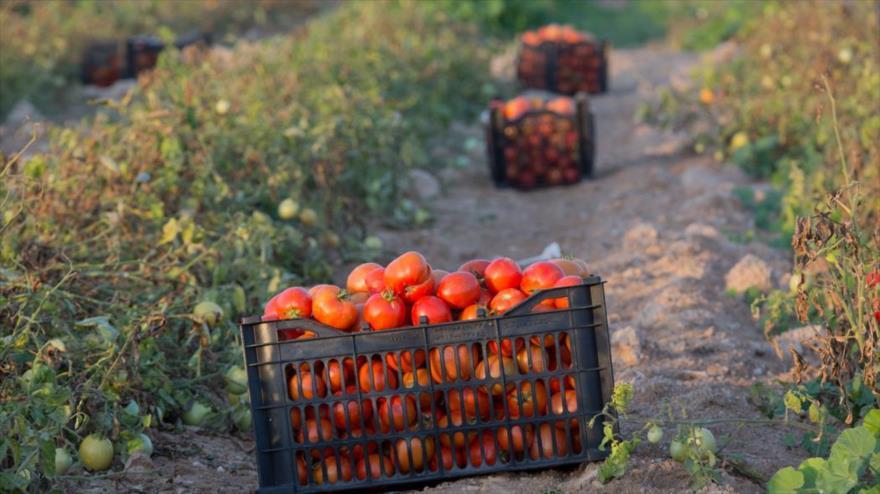 افزایش صادرات به اعتراض کشاورزان پایان نداد