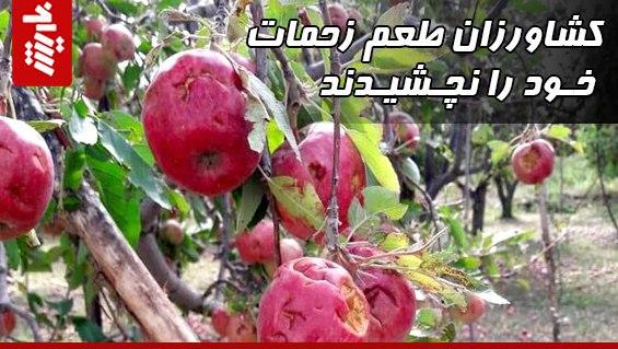 کشاورزان طعم زحمات خود را نچشیدند