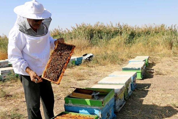 ظرفیت فراموش شده اقتصاد شیرین در آذربایجانغربی