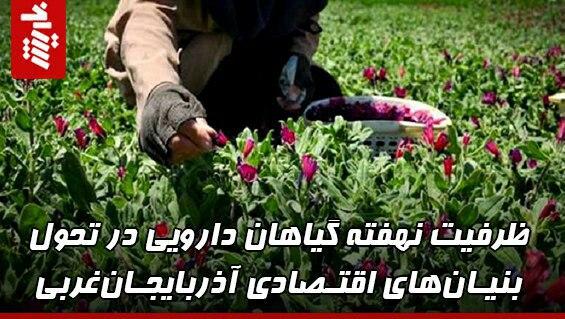 ظرفیت گیاهان دارویی در توسعه اقتصاد آذربایجانغربی