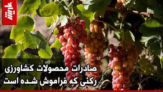 صادرات محصولات کشاورزی رکنی که فراموش شده است