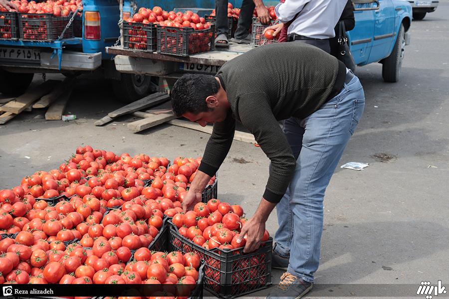 مرتفع شدن مشکل گوجهکاران با آغاز صادرات در ارومیه