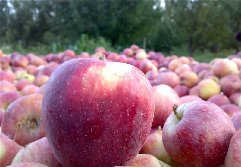 عرضه سیب ارومیه در بازار مظلوم واقع شده است