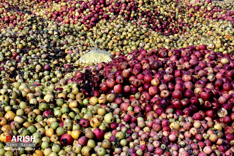 انباشت سیب در کنار جاده ها / ارومیه