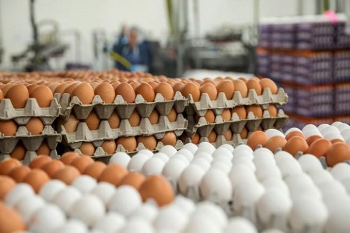 تخم مرغ هم از سفره مردم برچیده شد