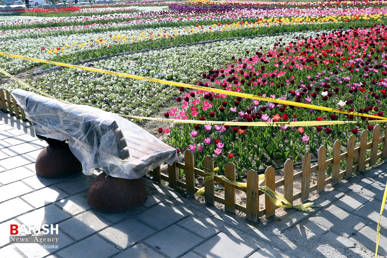 """گل های بهاری گوللرباغی """"پارک دانشجو"""" در قرنطینه"""