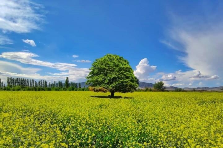 هوای استان تا اواسط هفته جاری آرام است
