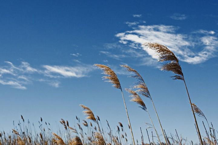 پیشبینی وزش باد نسبتا شدید در آذربایجانغربی