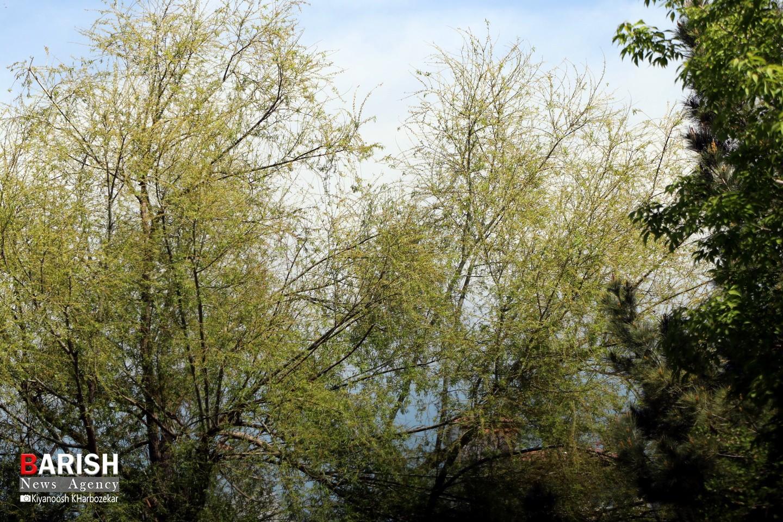 طبیعت بهاری پارک الغدیر ارومیه