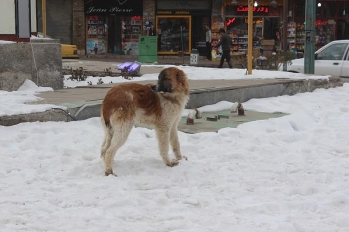 حیوانات در زمستان سرد نیازمند مهربانی انسان ها