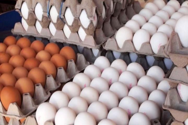 واردات ۱۰ هزار تن تخم مرغ برای ثبات بازار