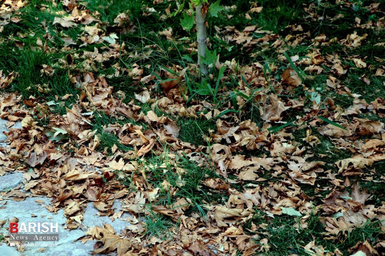 خودنمایی پاییز با تغییر رنگ برگ درختان