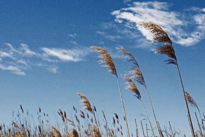 تدوام افزایش دما و وزش باد آذربایجانغربی