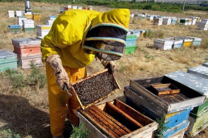 حمایت، کام تولیدکنندگان عسل را شیرین میکند
