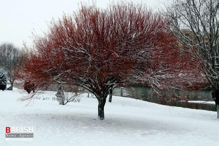 برف / ارومیه