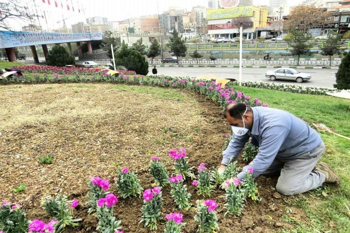 تزریق نشاط و شادابی با کاشت گلهای بهاری