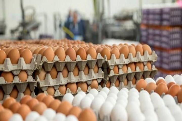 حذف کامل پروتئین از سفره اقشار ضعیف جامعه؛ با گرانی دوباره تخم مرغ