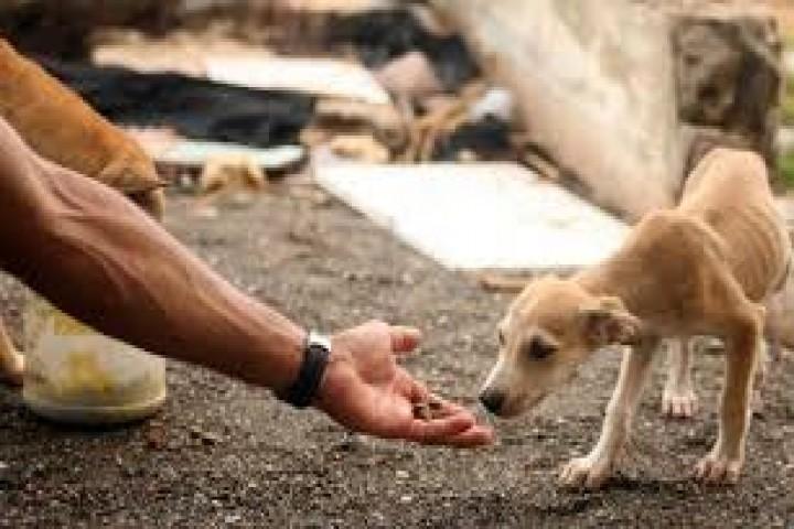 حیوانات همسایههای کوچک ما روی زمین