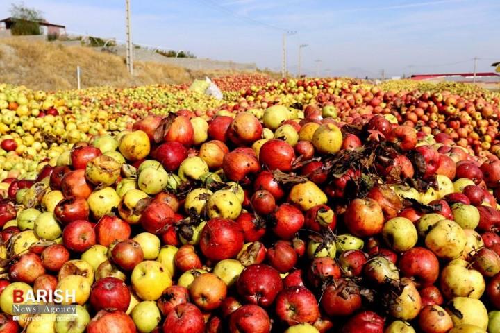 انباشت سیب های باغداران آذربایجان غربی در کنار جاده ها / قصه ای تکراری اما تلخ