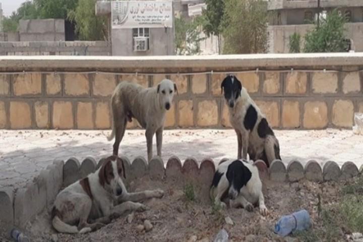 کلاف سردرگم ساماندهی سگهای ولگرد در ارومیه/مردم در انتظار تدبیری از سوی مسئولین