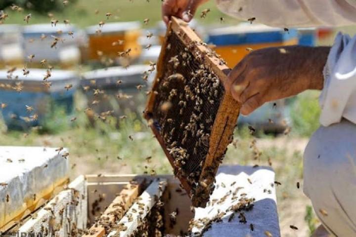 ظرفیت شیرین و بیبدیل عسل در آذربایجانغربی