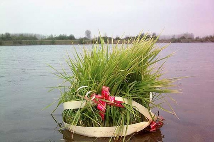 سبزه عید را در خانه به نیت شکست کرونا گره بزنیم