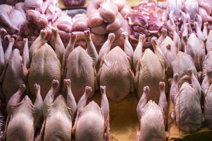 تلاطم بازار مرغ در ارومیه / سفره های مردم هر روز خالی تر از دیروز