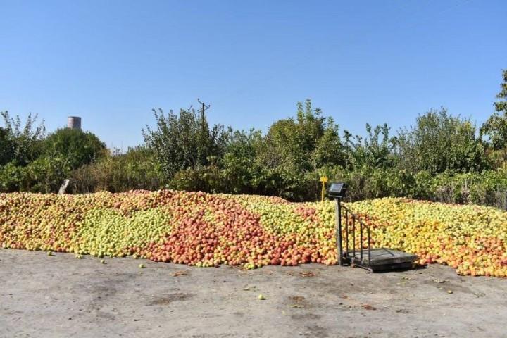 خطرِ انباشت سیب در روزهای کرونایی