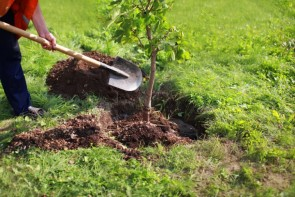 روز درختکاری، بهانهای برای آشتی با طبیعت