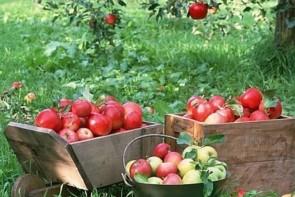 کشاورزان آذربایجان غربی زیر بار بی مهری مسئولان