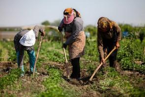 جلسات مسئولین درمانگر بحران کشاورزان خواهد شد!؟