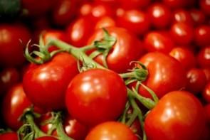 آشفتگی بازار گوجه فرنگی در ارومیه