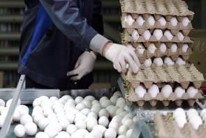قیمت تخممرغ، از یارانه دولت سبقت گرفت!