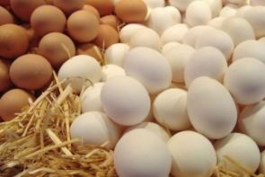 تخممرغ هم از قافله گرانی عقب نماند