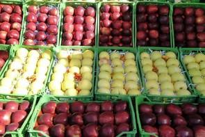 گرانی لجام گسیخته میوه در فصل فراوانی/ زحمت از کشاورزان و سود عاید دلالان