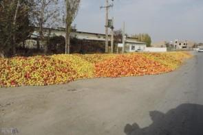 سیبهای رها شده ماحصل جلسات نمایشی